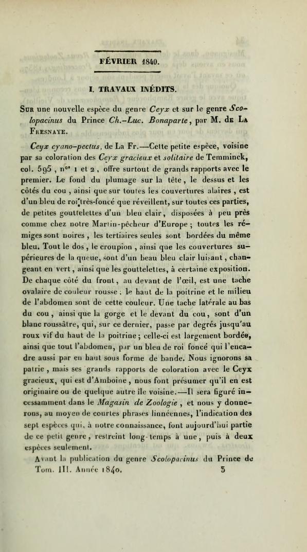 Sur une Nouvelle Espece du Genre Ceyx et sur le Genre Scolopacinus du Prince Ch.-Luc. Bonaparte