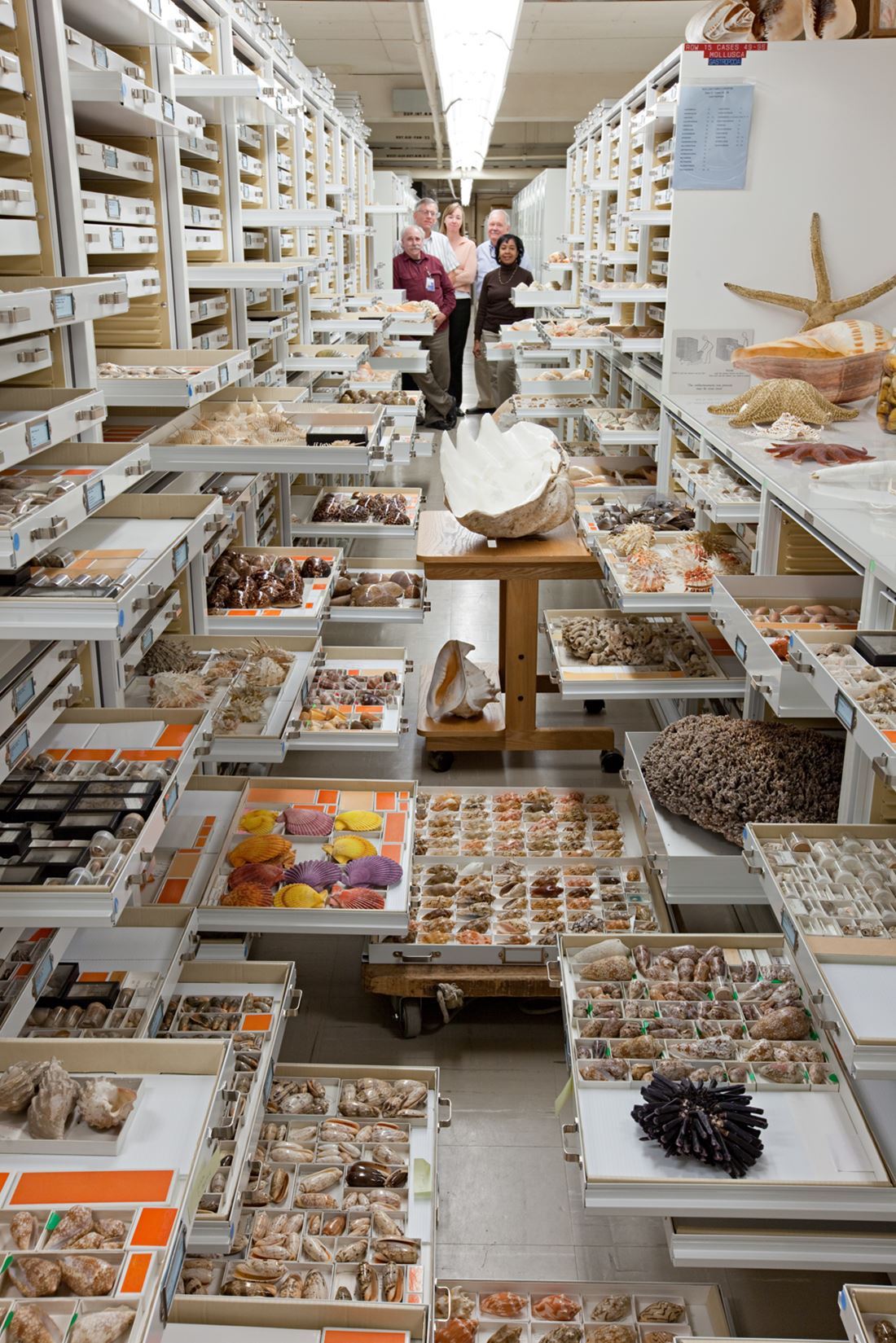Por trás das paredes do Museu Nacional de História Natural